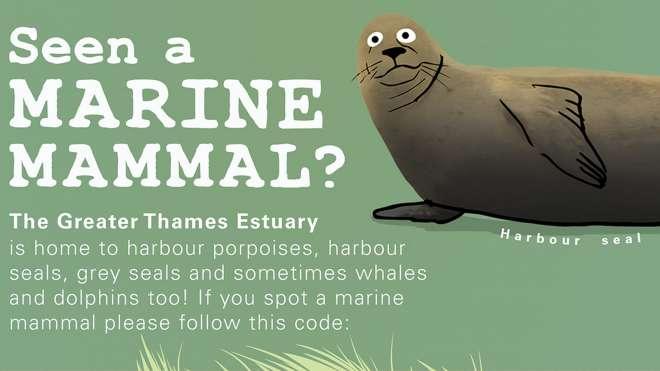 marine-mammal-infographic-small-thumbnail